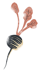 Illustration d'un radis pour Brut de Pomme